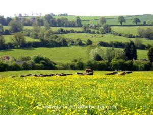 a typical Cotswold scene   copyright