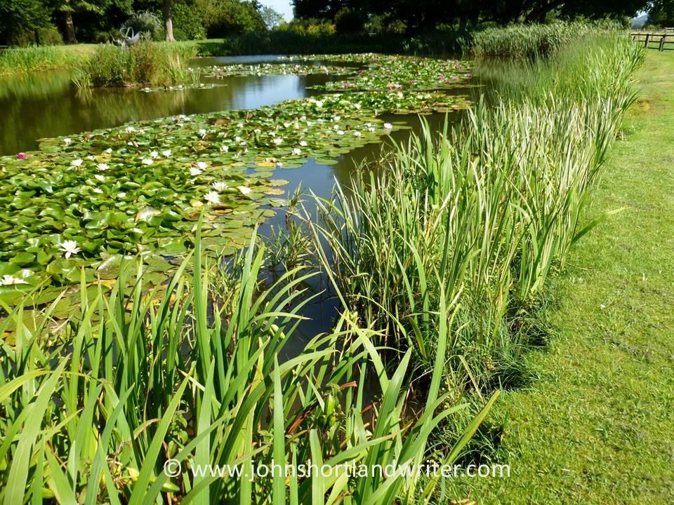 pond-2-copyright