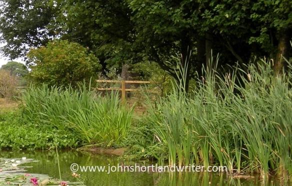 pond-5-copyright