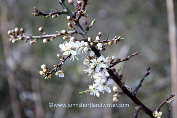 blackthorn-3-copyright