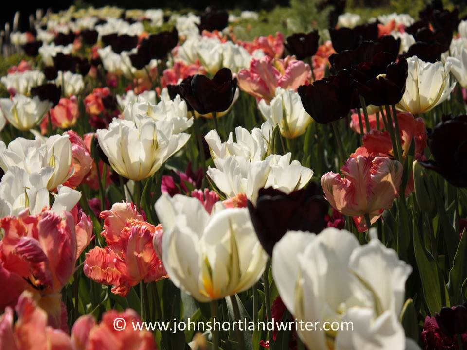 Tulips Lismore Castle copyright