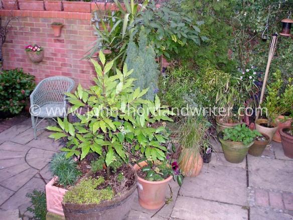 Garden Makeover 3a copyright