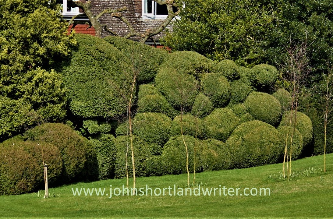 Box Cloud Topiary watermark