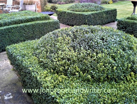Box hedge Clipping (10) Year 2 watermark