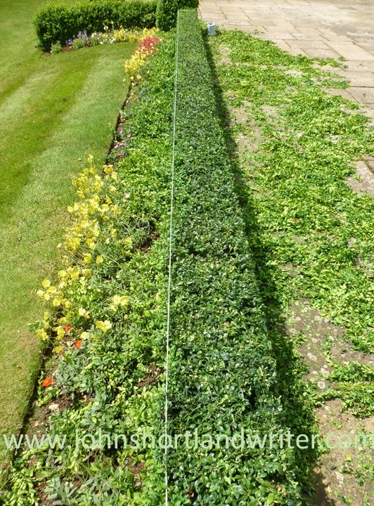 Box Hedge Clipping (2) watermark