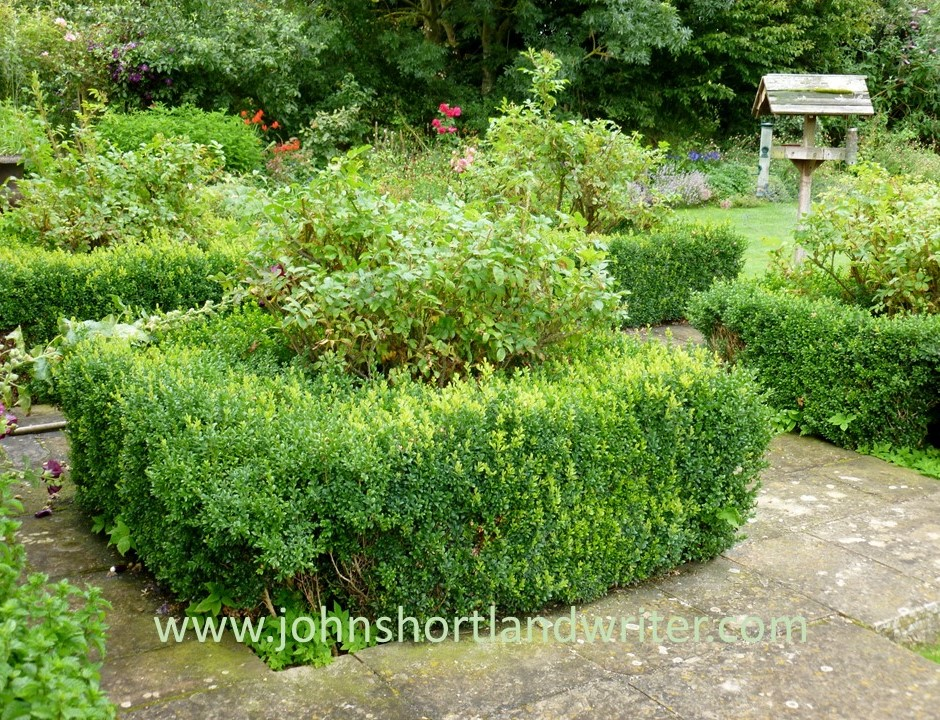 Box Hedge Clipping watermark