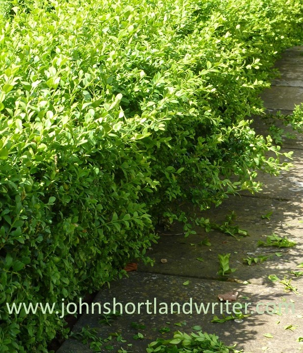 Box Hedge - Copy watermark
