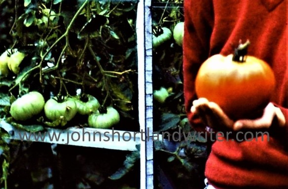 Tomato Big Boy 1979 watermark