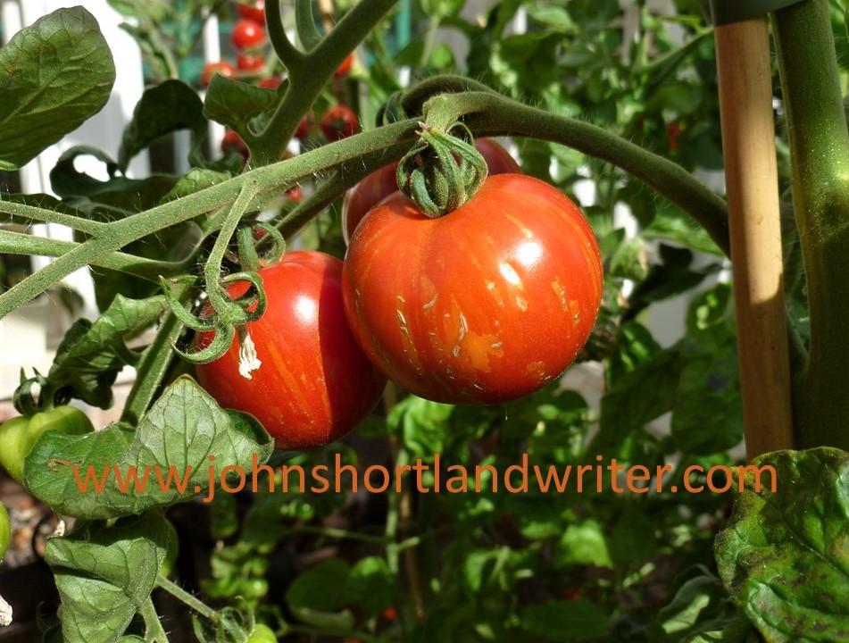 Tomato 'Tigerella' watermark
