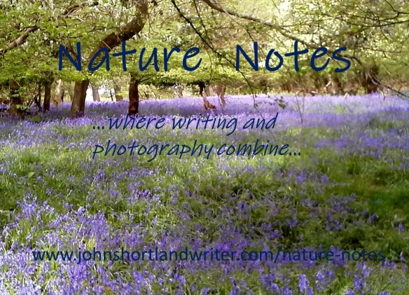 nature notes - front page