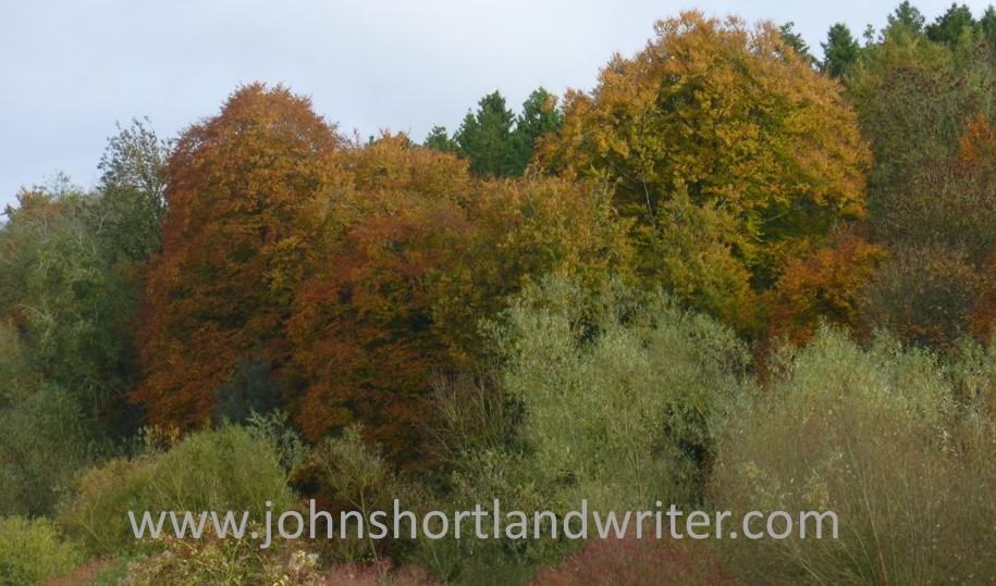 Autumn colour watermark