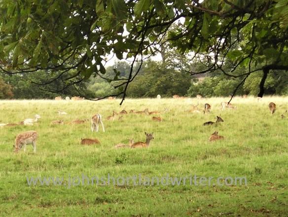 Fallow Deer watermark