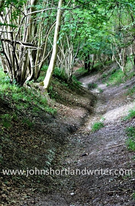 Woodland Track (2) watermark