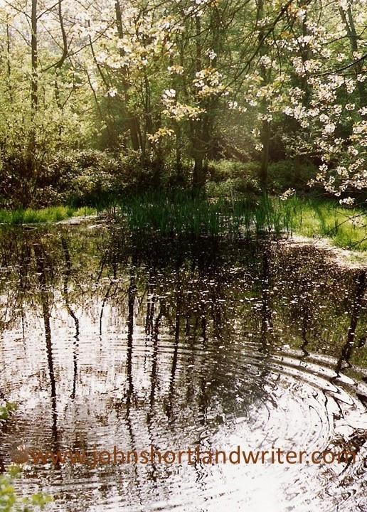 Ibstone Common (2) copyright