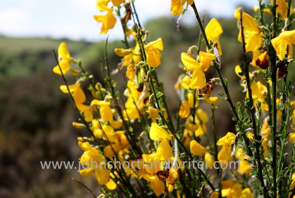 Broom watermark