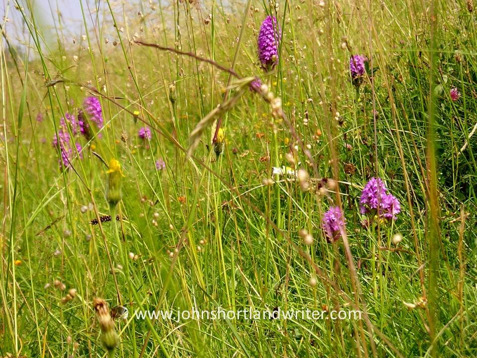 Wild Flower Meadow copyright